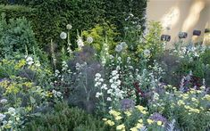 flowering parsnips, valerian, dianthus, fennel -- daily telegraph's garden at the chelsea flower show