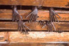 SandRamirez contra el maltrato animal. • www.luchandoporellos.es: LOS MURCIÉLAGOS FRUGÍVOROS DE SULAWESI.