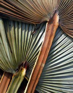 palm details