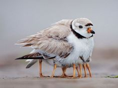 Bird keeping its youngsters warm