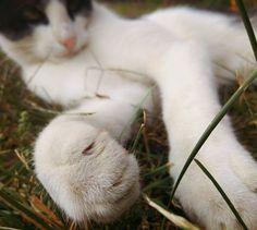 Cat paw by Rdzeniuch.deviantart.com on @DeviantArt
