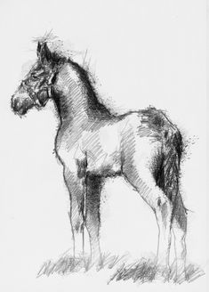 Shire foal, Artist Sean Briggs producing a sketch a day, prints available at https://www.etsy.com/uk/shop/SketchyLife  #art #drawing #foal #http://etsy.me/1rARc0J