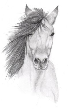 I always draw horses from the side, i never draw them looking forward. Today, it all changed... Anyways this is an attempt of a forward facing horse portrait, i would appreicate any comments, tips,...