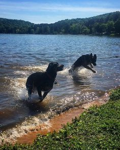 Swimming with Dogs