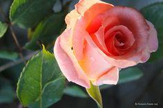 Las flores más bellas e infomación completa (de la A a la Z) | Cuidar de tus plantas es facilisimo.com