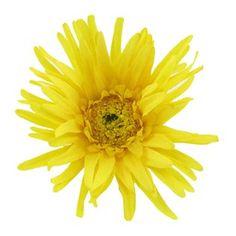 Yellow Gerbera Daisy | Shop Hobby Lobby