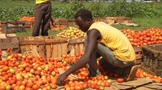 How can Africa achieve food security?