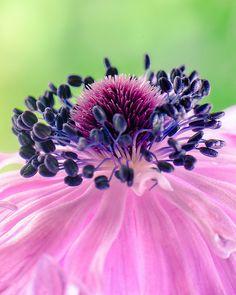 Exquisite bloom - ©Destin - www.flickr.com/photos/think_thank_thunk/7039635215/