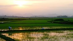 Sunset over rice: Peaceful?; Phong Nha-Ke Bang, Vietnam