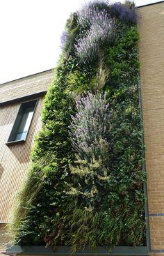 Westminster City School green wall