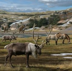 Man not guilty of killing off ice age giants