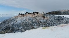 An Adelie penguin rookery - and yet another one in the background.  There were 5 rookeries on this one small island.