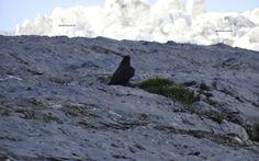 bergvogel vogelsang in den Bergen hören Bergen, Mount Everest, Mountains, Nature, Travel, Viajes, Traveling, Nature Illustration, Off Grid