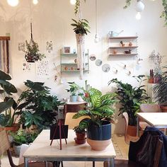 #wildernisamsterdam #plants & #coffee
