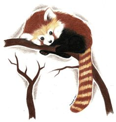 Red Panda by Rimfrost.deviantart.com on @deviantART