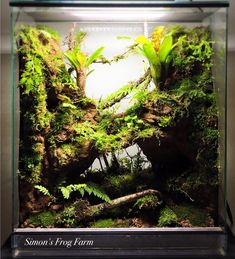 Image result for paludarium overhang