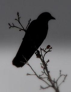 Ravens learn to skate