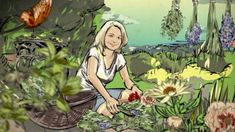 Kouzelné bylinky: Svatojánské byliny — Česká televize