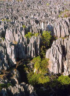 ベマラハ国立公園 ツィンギー  マダガスカル