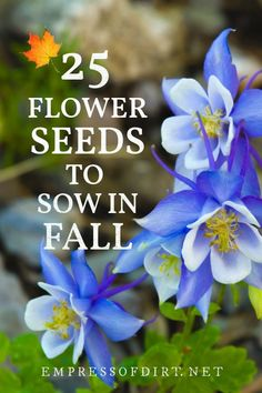 25 Annual and Perennial Flower Seeds to Sow in Fall (Printable List) | Empress of Dirt Growing Flowers, Growing Plants, Planting Flowers, Fall Plants, Garden Plants, House Plants, Flowers Perennials, Garden Seeds, Autumn Garden