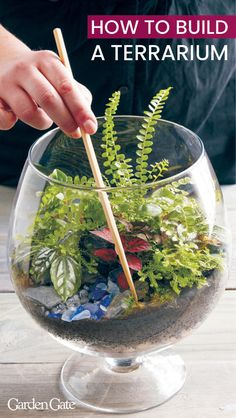 Check out our tips for building a perfect terrarium Add some green to your indoor space with a thoughtfully-made terrarium. Read on for all you need to know to create the dreamiest indoor garden. Terrarium Diy, How To Make Terrariums, Orchid Terrarium, Glass Terrarium Ideas, Succulent Gardening, Succulents Garden, Container Gardening, Succulent Planters, Cactus Plants