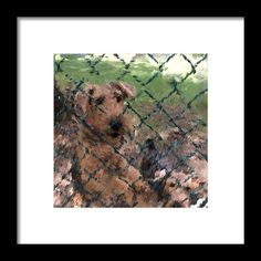 Airedale Puppies Framed Print featuring the digital art Airedale Puppies Aerial And Jett by Janis Kirstein