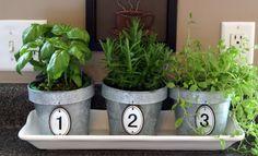 Pflanzen in der Küche - Tipps rund um die Pflege
