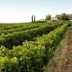 There are many wineries throughout Greece with proper facilities to host wine tours