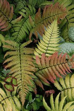 Plants that thrive in shady Northwest gardens | HeraldNet.com - Home and Garden