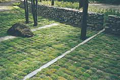 For H. Keith Wagner's Hilltop residence, moss is the green ground cover alternative to water-guzzling grass.
