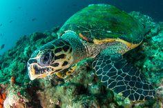 Saving sea turtles in Tanzania © Hagai Zvulun