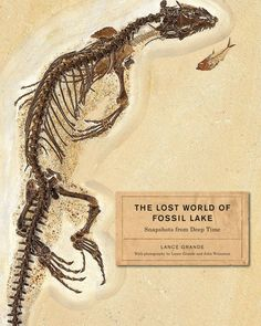 The lost world of Fossil Lake bookcover showing a close-up of the monitor lizard and the skin impressions around the torso - Fossil Butte, which is part of the famous Green River formation.