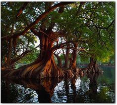 EstiloDF » Adéntrate en la belleza michoacana del Lago Camécuaro 🌳🌳🌳