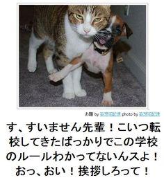 画像 : 「ボケて」殿堂入りボケ傑作選 - NAVER まとめ Pretty Cats, Cute Cats, Funny Cute, Hilarious, Japanese Funny, Smiles And Laughs, Funny Moments, Funny Photos, Cat Lovers