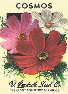 Heirloom Seed Packets | Heirloom Flower Seed Packet Note Cards