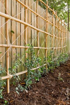 This bamboo trellis is a great way to grow vining crops up against a fence.
