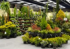 PLANT CENTER DISPLAYS FOR RETAIL | And I like their display fixture, so easy to see all the plants!