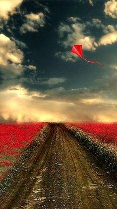 Red Kite in Autumn.