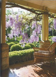I hope our wisteria looks like this one day...