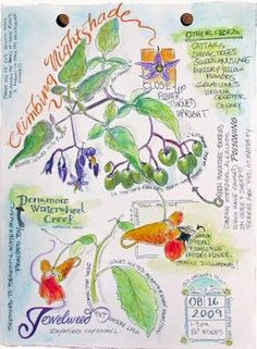 Sketching in Nature: The Building of a Journal Page--Pam Johnson Brickell
