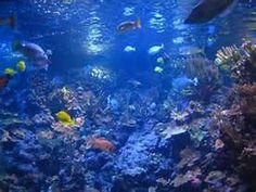 beautiful marine life - Bing images