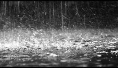 E per fortuna poi arriva la pioggia a lavar via tutto lo schifo che c'è...