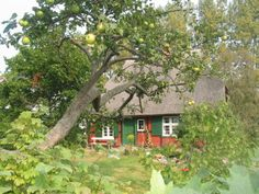 Born Ferienhaus,Darß