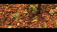 #14 Thanks, Steve, for posting this beautiful video about children and nature. A great competition entry. To enter our competition, go to www.nationalchildrensdayuk.com/competition.html