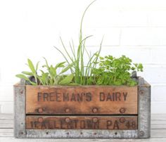 Vintage Wood and Metal Crates as Planters