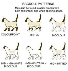 ragdoll patterns