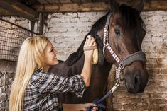 So you may ask, what is it that we need to do this spring to get our horses ready for the weeks and months ahead? Here is a quick checklist of horse care tips you should be considering while getting your horses ready for spring. Buy A Horse, Horse Love, Dressage, Horse Information, Horse Care Tips, Best Bond, Horse Grooming, All About Horses, Horse Training