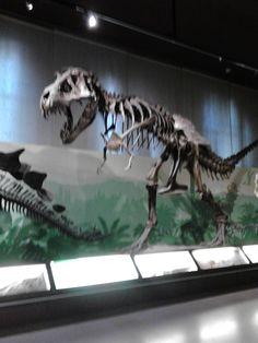 Tyrannosaurus Museo di storia naturale Milano