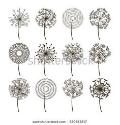 Dandelion flower icons. Dandelions fluffy seeds vector silhouettes. Natural plant blossom black illustration