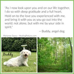 Animal Communication, Deepest Gratitude, Messages For Him, Lhasa Apso, Pet Loss, Beautiful Dogs, Our Life, Grief, Itunes